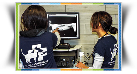 Veterinario ecografia radiologia