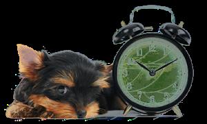 Orari-clinica-veterinaria