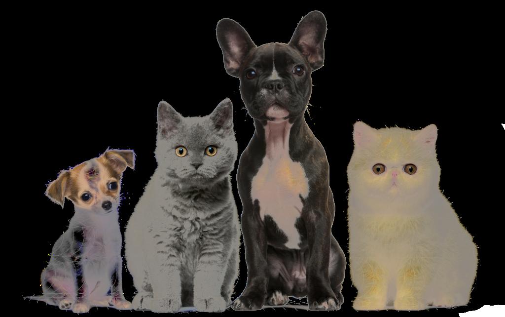 Pets-animali