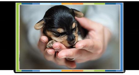 Riproduzione-clinica-veterinaria