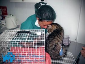 Clinica-Veterinaria-Dott.ssa-Patrizia-De-Santis-5